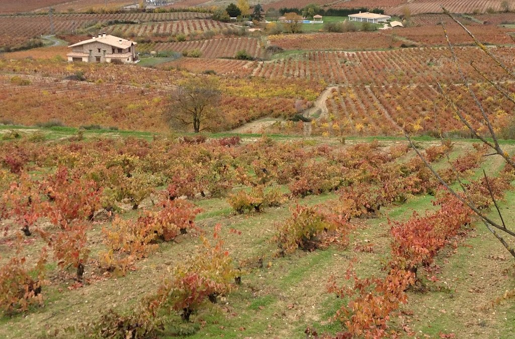 Touring the Wineries of Laguardia